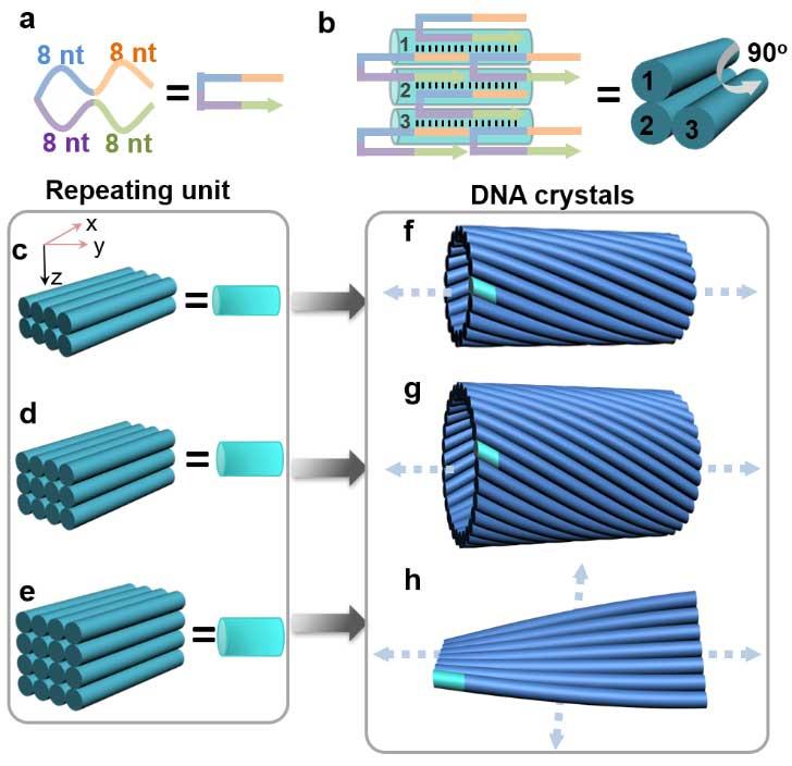 西安交大科研人员在手性DNA纳米管自组装研究方面取得重要进展