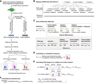 北京大学魏文胜课题组开发单氨基酸精度绘制蛋白质功能图谱新方法