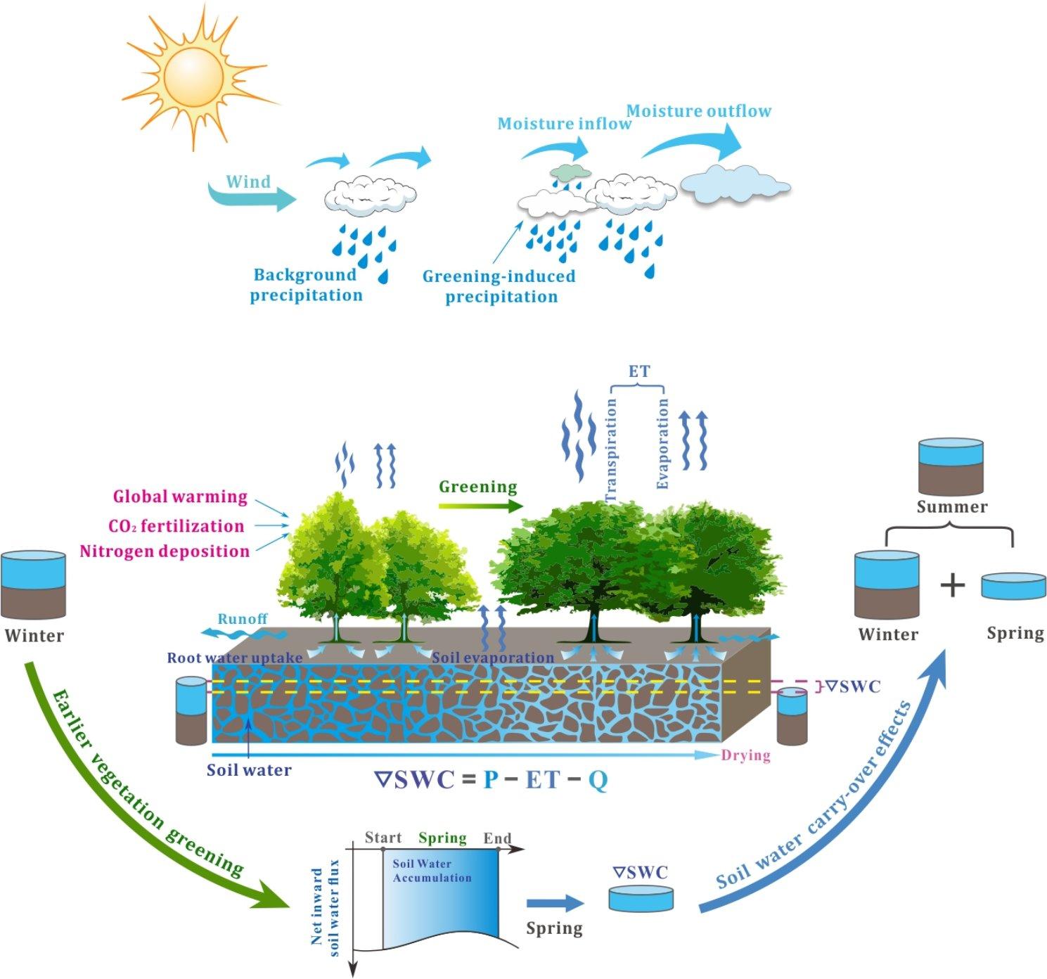 北京大学朴世龙课题组在Science Advances发表论文 揭示北半球植被春季物候提前加剧夏季干旱和热浪发生