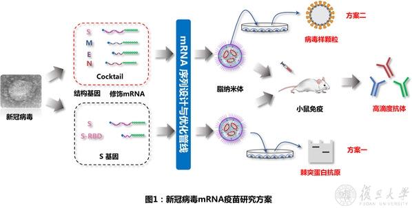 复旦和上交团队使用mRNA首次实现新型冠状病毒(SARS-CoV-2)病毒样颗粒的表达