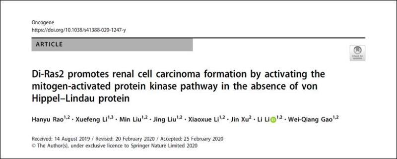 上海交通大学高维强、李力课题组新发现:Di-Ras2——肾癌中一个连接VHL介导泛素化与MAPK通路的新桥梁