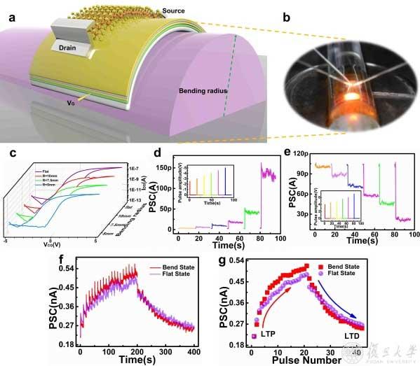 复旦大学微电子学院陈琳、孙清清团队提出超低功耗二维柔性神经形态器件光电协同调制新策略-第1张图片-C9联盟