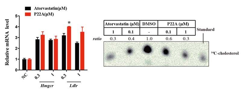 清华大学饶燏课题组合作发文展示靶向3-羟基-3-甲基-戊二酰辅酶A还原酶的降解小分子-第2张图片-C9联盟