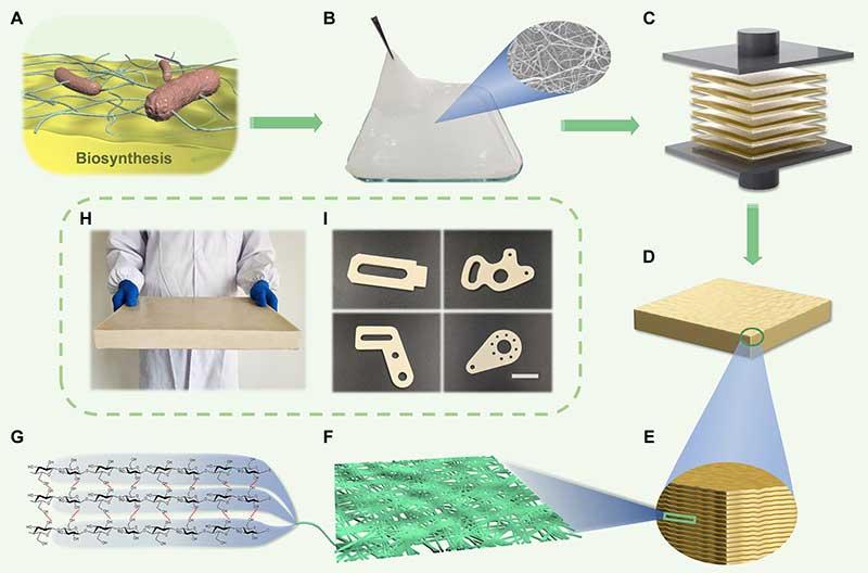 中国科大俞书宏团队新型纳米纤维素高性能仿生结构材料研制获重要进展-第1张图片-C9联盟