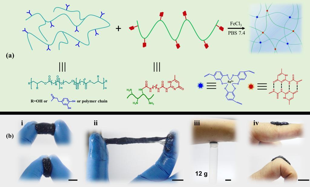 西安交大憨勇教授课题组研发出可光热移除的物理双网络水凝胶粘合剂敷料