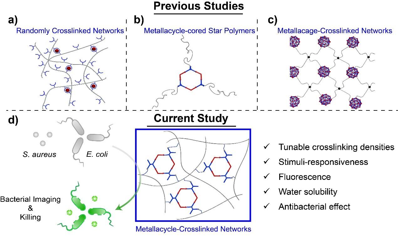 西安交大科研人员在拓扑结构交联的聚合物网络领域取得重要进展